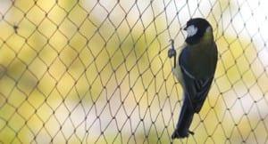 Agricultural Netting | Bird Control Netting | Wildlife Control Netting | Redden Net Custom Nets Ltd.