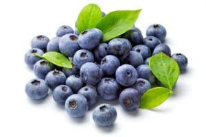 bird netting cna protect blueberries