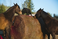 """<h5>Slow Feeder Net</h5><p>Slow feeder netting for horses.</br> To learn more, visit the <a href=""""/netting-products/slow-feeder-nets/"""">slow feeder page</a>.</p>"""