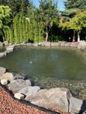 """<h5>Koi Pond Predator Netting</h5><p>Pond netting using a 50' x 75' piece of Viper 3000 Black  ¾"""" x ¾"""" mesh netting.<br /> Learn more about <a href=""""/netting-products/agriculture-netting/"""">agricultural netting</a>. </br><a href=""""/portfolio/koi-pond-predator-netting/"""">See all the pictures.</a></p>"""