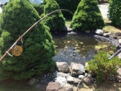 """<h5>Fish Pond Predator Netting</h5><p>Pond netting using our Predator netting # 48.<br /> Learn more about <a href=""""/netting-products/agriculture-netting/"""">agricultural netting</a>.</p>"""