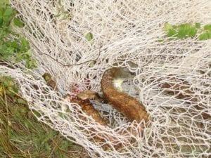 snake in plastic netting